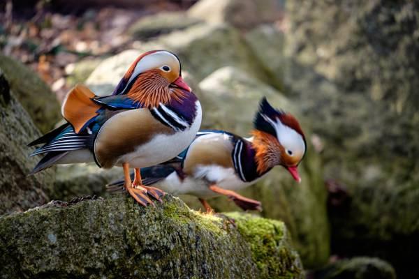 两个农民鸟高清壁纸