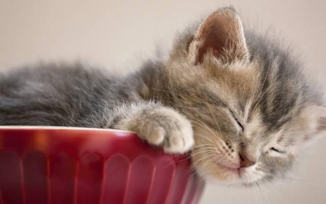 睡觉,宝贝,小猫
