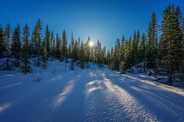 冬天森林风光