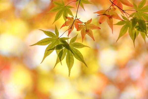 秋天,叶子,宏,散景