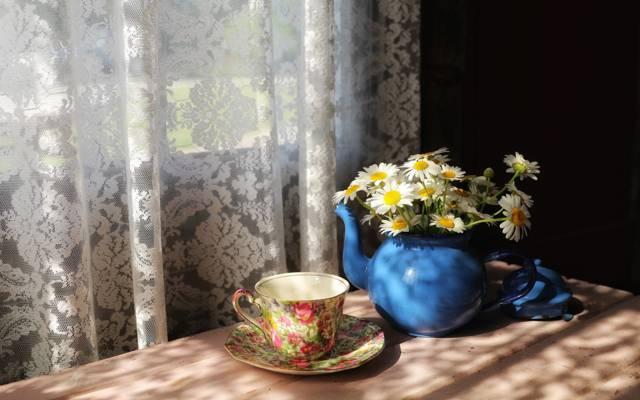 洋甘菊,房子,窗口,杯