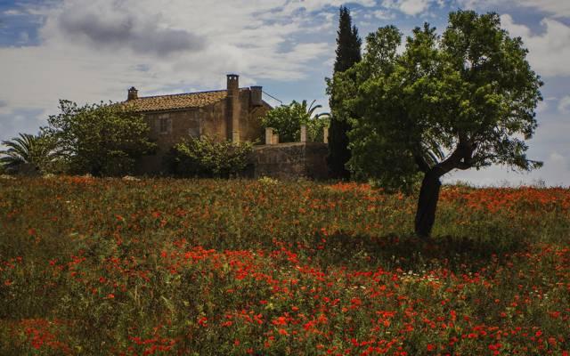 花,西班牙,西班牙,树,房子,Maki,草地,Montuiri,Montuiri,马略卡岛,马略卡岛