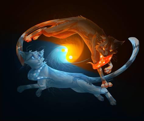 动物,阴阳,水,猫,黑色背景,火