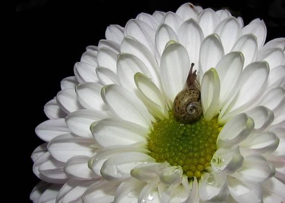 棕色蜗牛白色的特写照片聚集了花HD墙纸