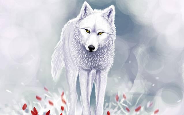 红色的花,白狼,雪,冬天