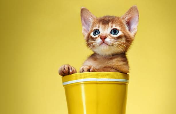 猫,背景,小猫,红色,黄色,靴子