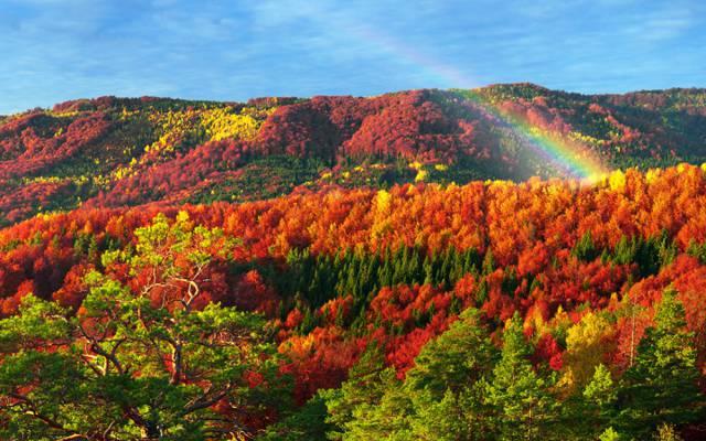 森林,喀尔巴阡,金,乌克兰,秋天,Transcarpathia,树,山,多彩,太阳