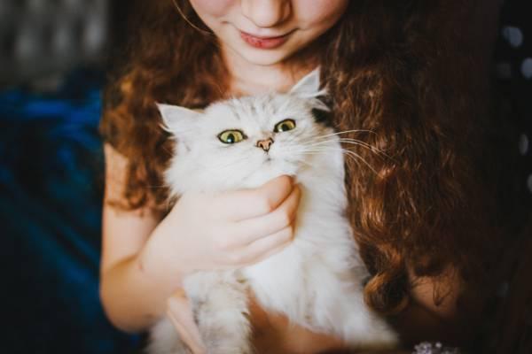女孩,白色,看起来,猫
