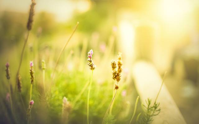 鲜花,早晨,宽屏,一天,模糊,高清壁纸,壁纸,绿色,领域,全屏幕,花,背景,宽屏,...