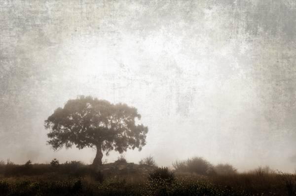 树,治疗,草,灌木丛,性质
