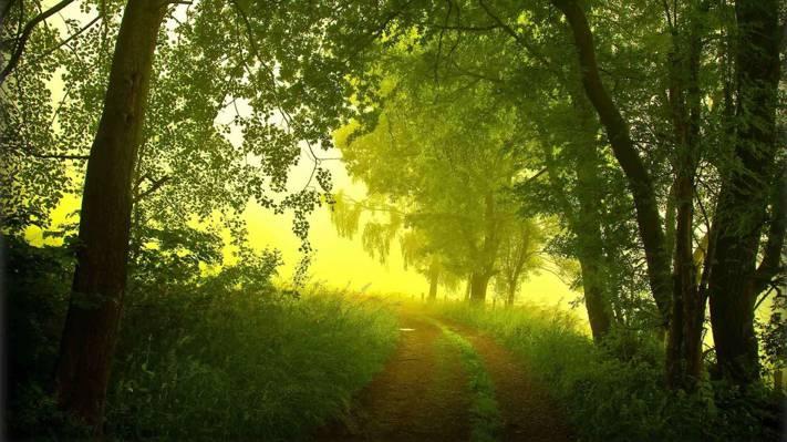 早上,夏天,雾,路,树木,森林