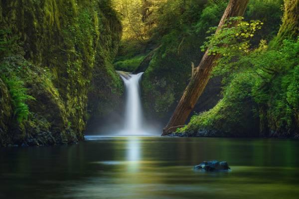 植被,自然,瀑布,树木,河,胜利者Carreiro,美国