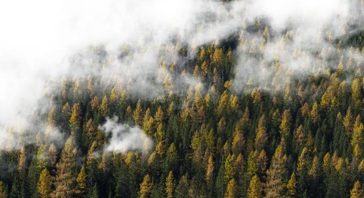 多云森林高清壁纸