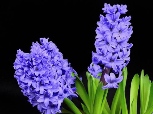 紫色的鲜花高清壁纸