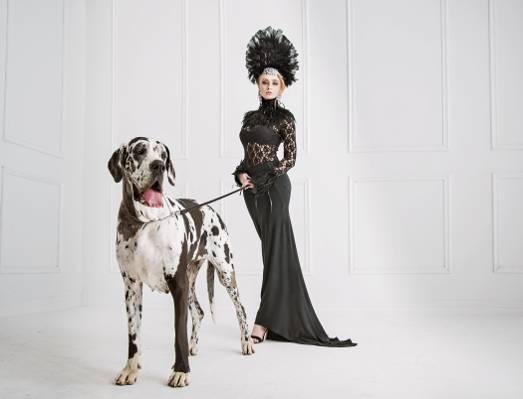 狗,构成,羽毛,性感,黑色,金发,图,衣服,苗条,装修,发型,达尔马提亚,化妆,打扮