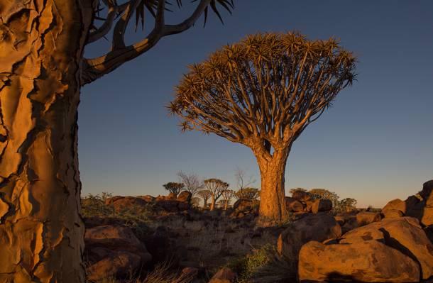 非洲,风景,天空,纳米比亚,树木,石头,日落