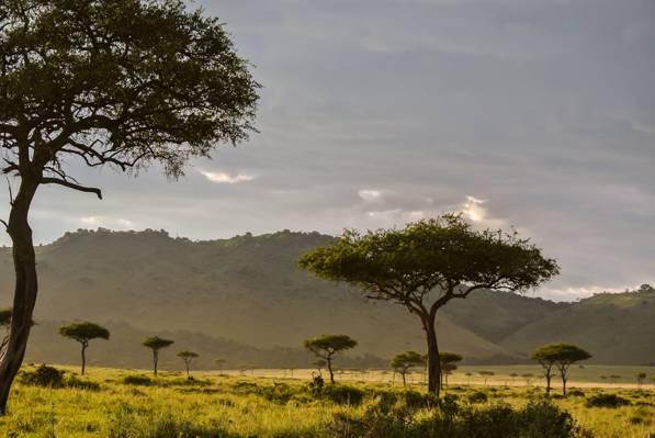 草地的风景摄影与在白天包围的树的高山墙纸