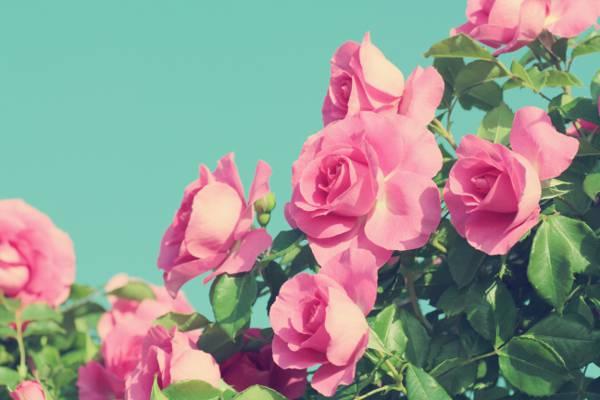 唯美清新花朵