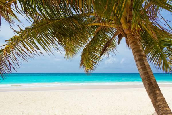 椰子树在白天高清壁纸附近的海洋摄影