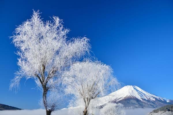 富士山,雪,天空,冬天,树木,日本