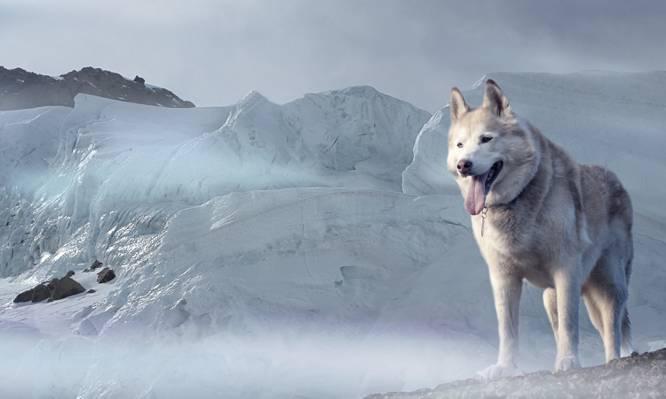 短大衣白色和黑色的狗高清壁纸