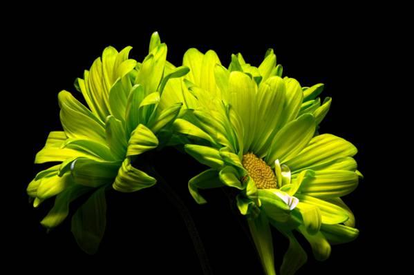 鲜花,背景,性质