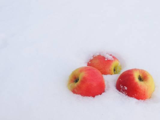 弗罗斯特,苹果,雪,冬天