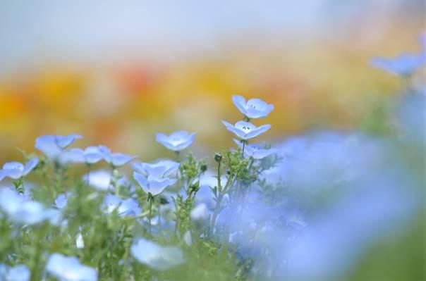 温柔,鲜花,性质,len,林间空地,模糊,绿色,蓝色,春天
