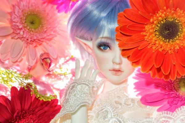 鲜花,玩具,非洲菊,娃娃,小精灵