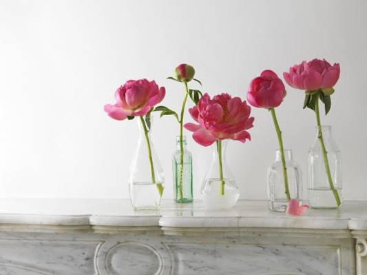 花瓶,芽,茎,组成,花瓣,牡丹,瓶,粉红色