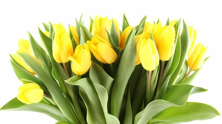 Wallpaper花,花,美容,黄色,郁金香,光,叶子,花瓣,花束,黄色,明亮,明亮,郁金香,美容,花束,...