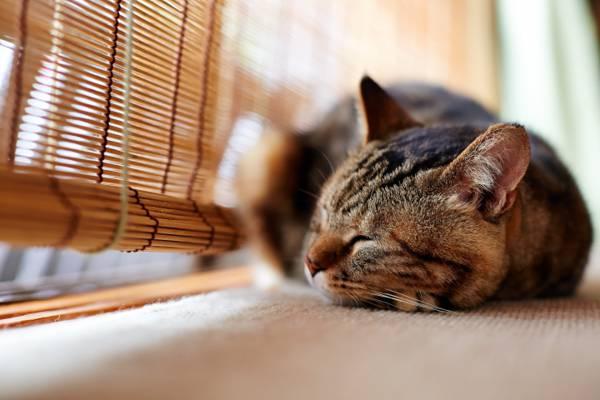 黑色的虎斑猫附近棕色木制百叶窗在白天高清壁纸的浅焦点摄影