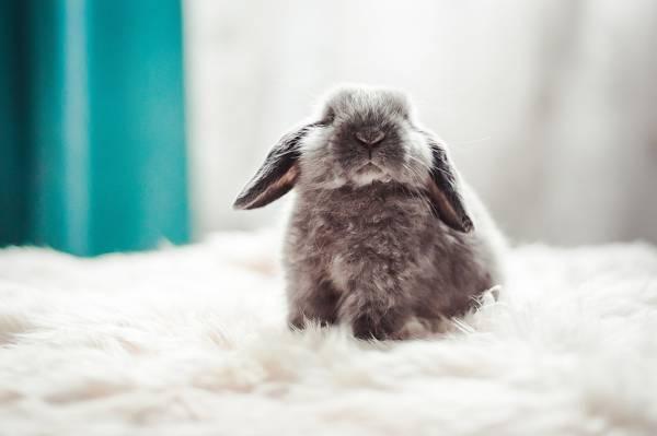 宝贝,兔子,蓬松,背景