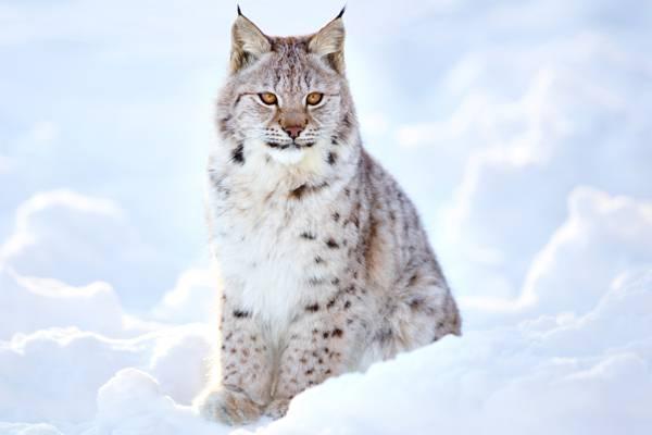 野生猫,性质,旅游,散景,模糊,壁纸,动物,检查周边地区,我的星球,l,,...