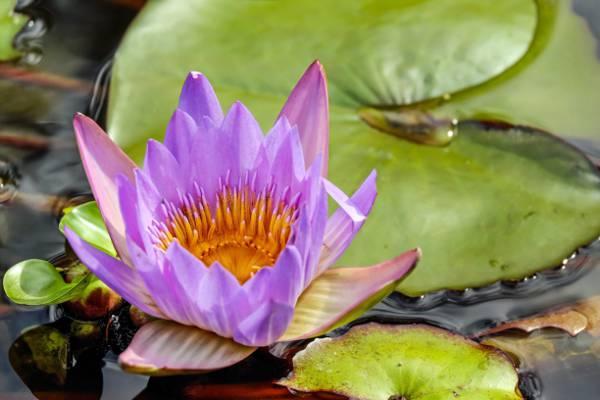紫色的花瓣身上的水高清壁纸