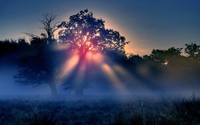 太阳,树木,光线,晨雾,自然