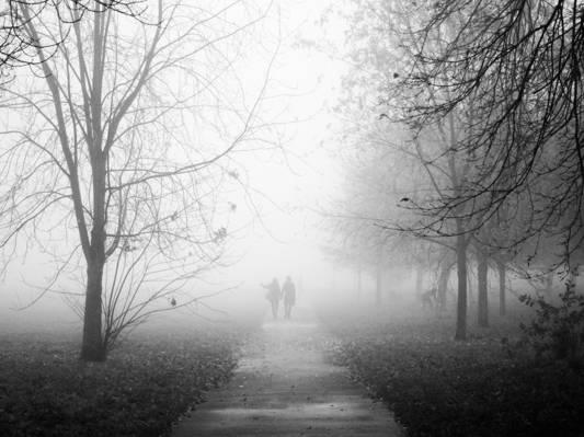 情侣走在路边行树附近,摄政公园高清壁纸