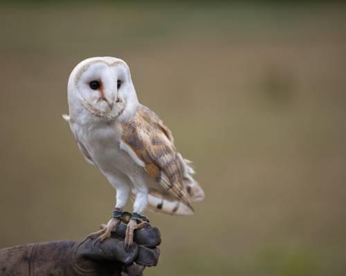 在白天的高清壁纸白色和棕色的猫头鹰选定的摄影