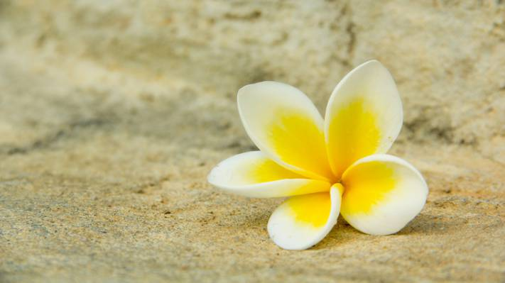 宏,花瓣,鸡蛋花,白色,黄色,花
