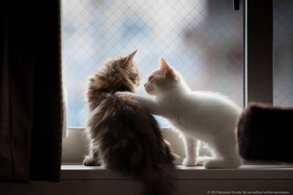 对,nyashki,小猫,蓬松