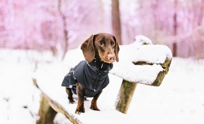 雪,长凳,狗