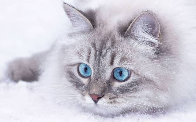 雪地上卖萌的小猫咪