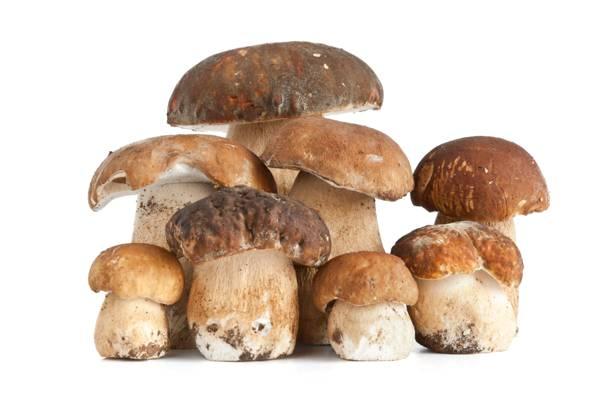 食品,背景,蘑菇,白色