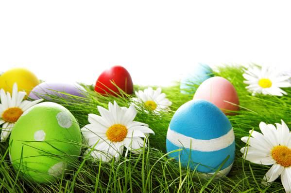 鸡蛋,复活节,草,花,春天