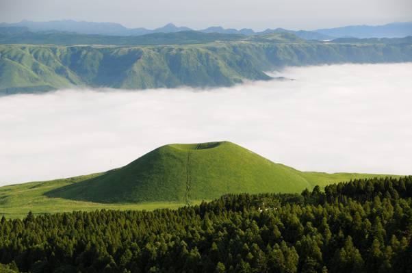 绿色的叶子树在白天的山背景高清壁纸