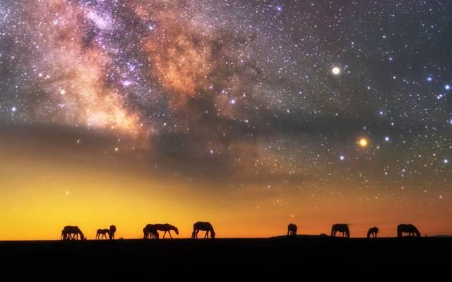 壁纸剪影,星星,马,天空,银河系,夜晚,晚上