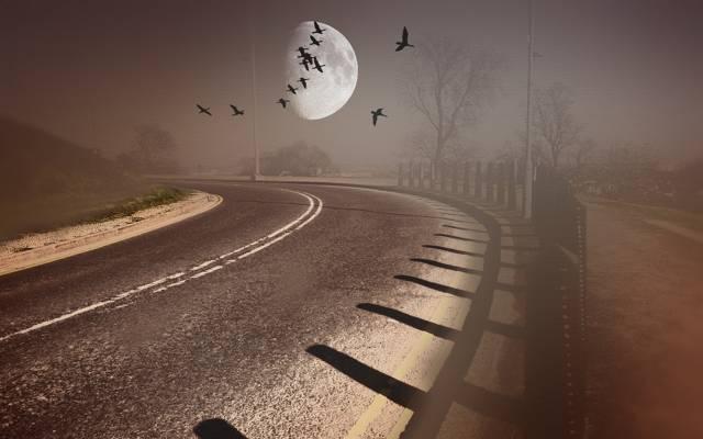 风格,鸟类,背景,道路
