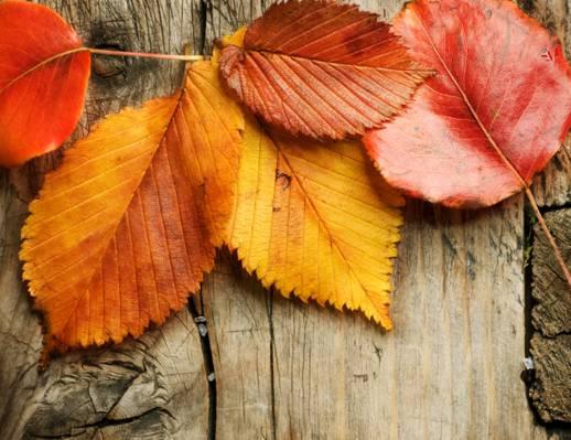 秋天,木材,叶子,秋天,秋天,叶子