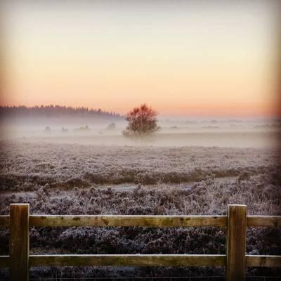 在日出时用雾包围的孤独的树高清壁纸