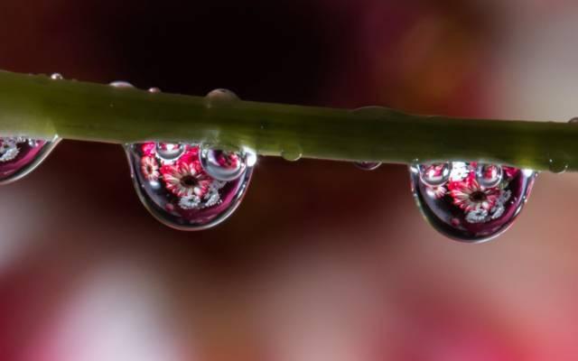 鲜花,宏,水,反射,干,滴